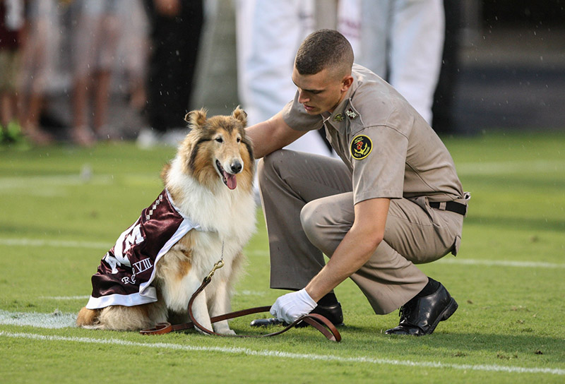 Texas A Amp M Cadet Rewarded For Protecting Mascot Reveille