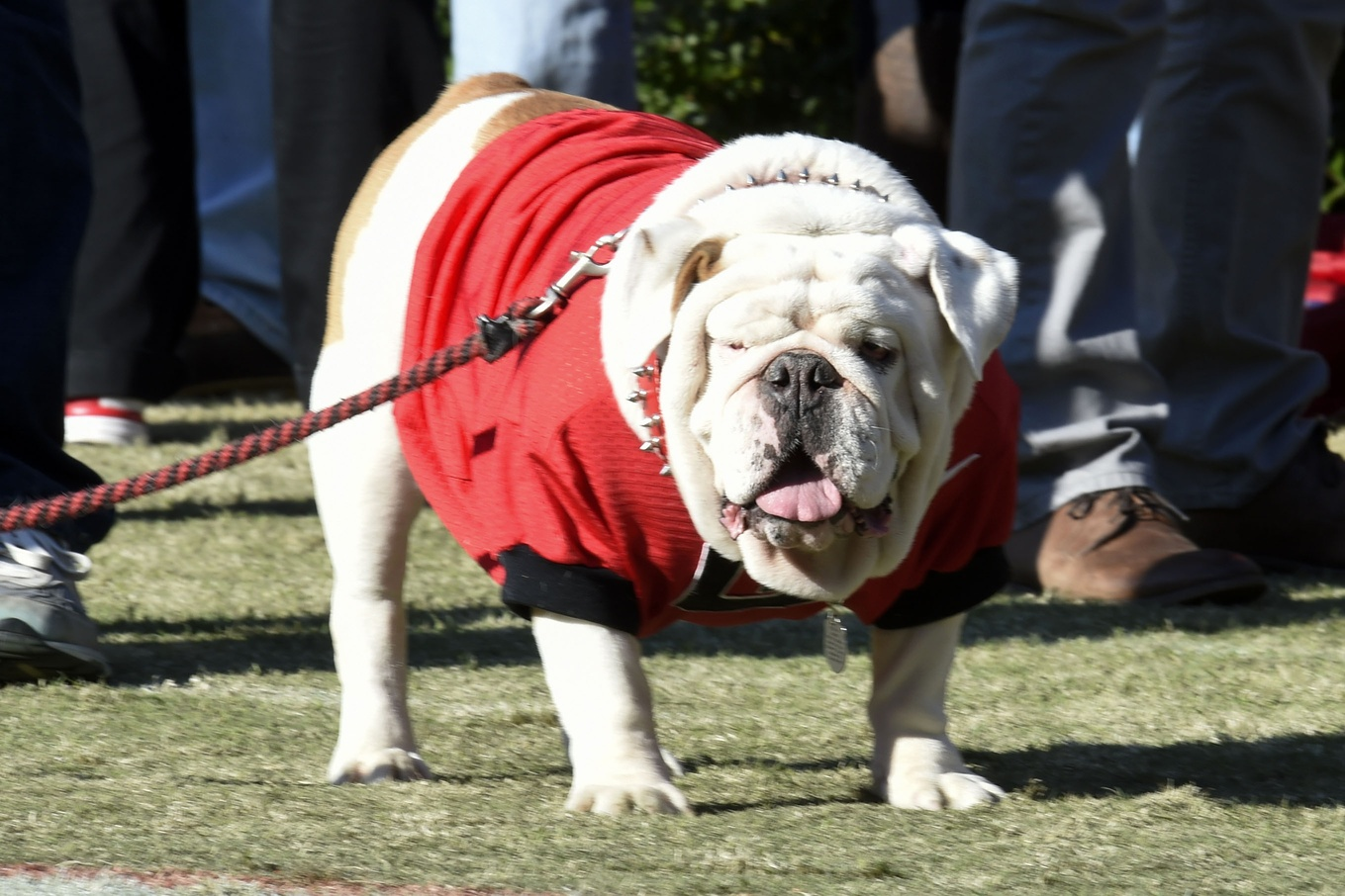 Ole Miss Names For Dogs
