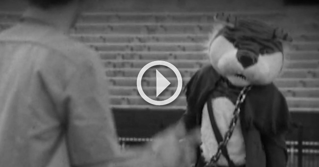 Video Lsu S Spooky Halloween Skit Features Mike The Tiger Squashing