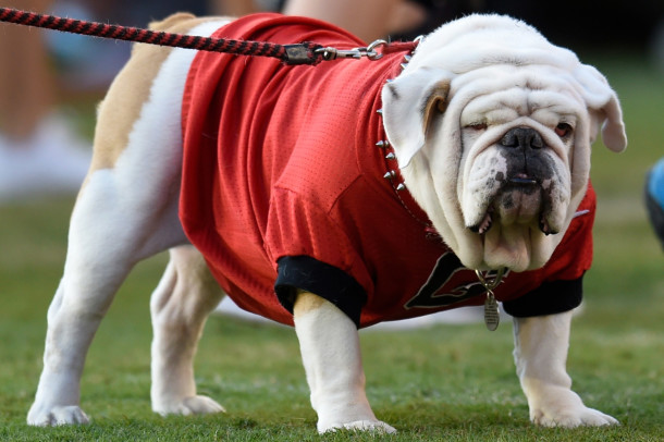 Oct 4, 2014; Athens, GA, USA; Georgia Bulldogs mascot UGA shown on the field during the game against the Vanderbilt Commodores during the second half at Sanford Stadium. Georgia defeated Vanderbilt 44-17. Mandatory Credit: Dale Zanine-USA TODAY Sports