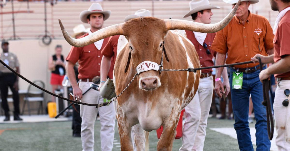 Obsessed much? Texas mascot Bevo's manure bucket takes shot at Texas A&M